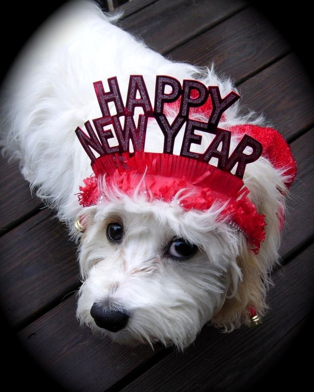 Community Post: 13 Cutest Pets Party At New Years!