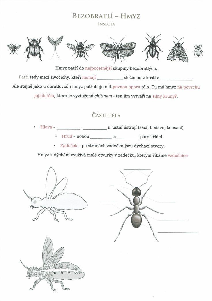 Bezobratlí - Hmyz 1 ( úvod a části těla)