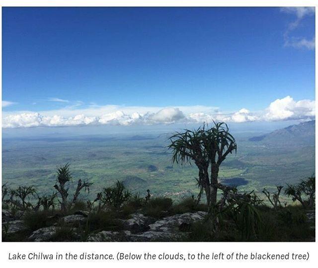 A Malawian blogger writes an interesting account of the ascent of the first part of #Chambe Peak (20th highest peak on #MulanjeMountain). The pictures help to visualise some of the climbing & hiking.  His blog is 'Ndimakonda': http://ift.tt/2nhQRVk  #MountMulanje #Hiking .. #Malawi #Mulanje #LakeChilwa #fbp #tw #fb #blog #MalawiPlaces