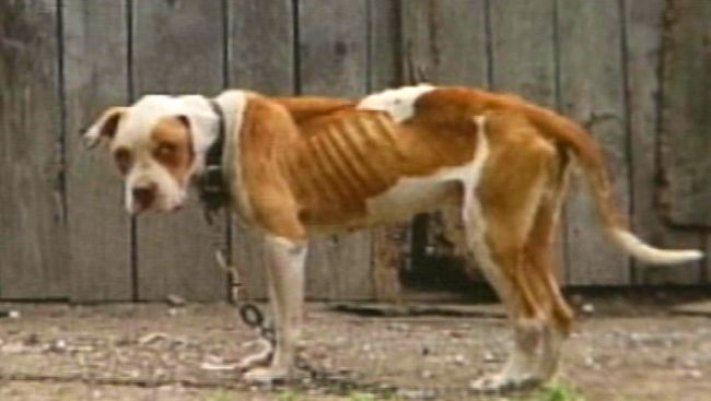 Animal Abuse Registry for Cuyahoga County in Ohio Launched - The online registry provides information about individuals convicted of felony animal abuse within Cleveland and the rest of the county. http://www.dailyprogress.com/cuyahoga-county-animal-abuse-registry-goes-live-in-cleveland/article_7a95fd7b-f312-571b-8a56-102e72197740.html