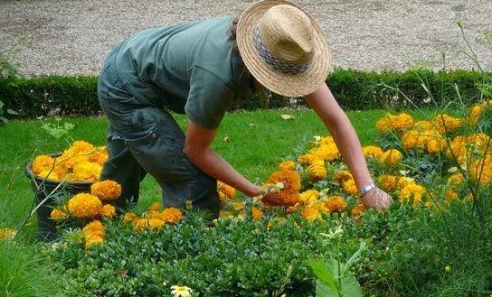 """E' boom di startup da giardiniere in Italia con le attività di cura e manutenzione del paesaggio. Altro che idee """"spaziali"""" e innovative."""