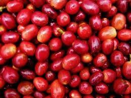 Coffee arabica ( gayo aceh tengah )