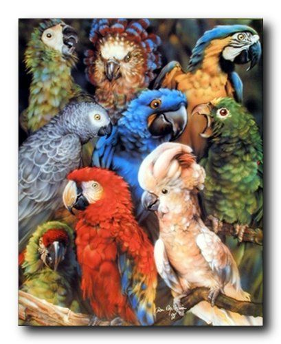 Wall posters are the simple, affordable way to brighten up any space in your home. This wall poster brings a touch of tropical birds into your home decor. This poster depicts the image of collage picture of tropical parrots is sure to grab lot of attention. This animal inspired poster will be a great addition to your home. So what are you waiting for, grab this wall poster which offers you both quality and affordability as well.