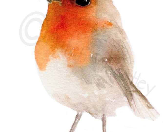 Pájaro de Robin, lámina #86