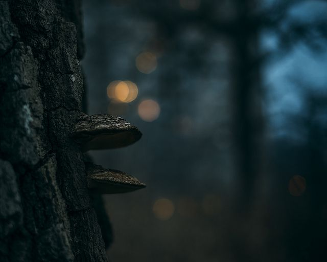 they have arrived | amy buxton | nature | photography | forest | mushrooms