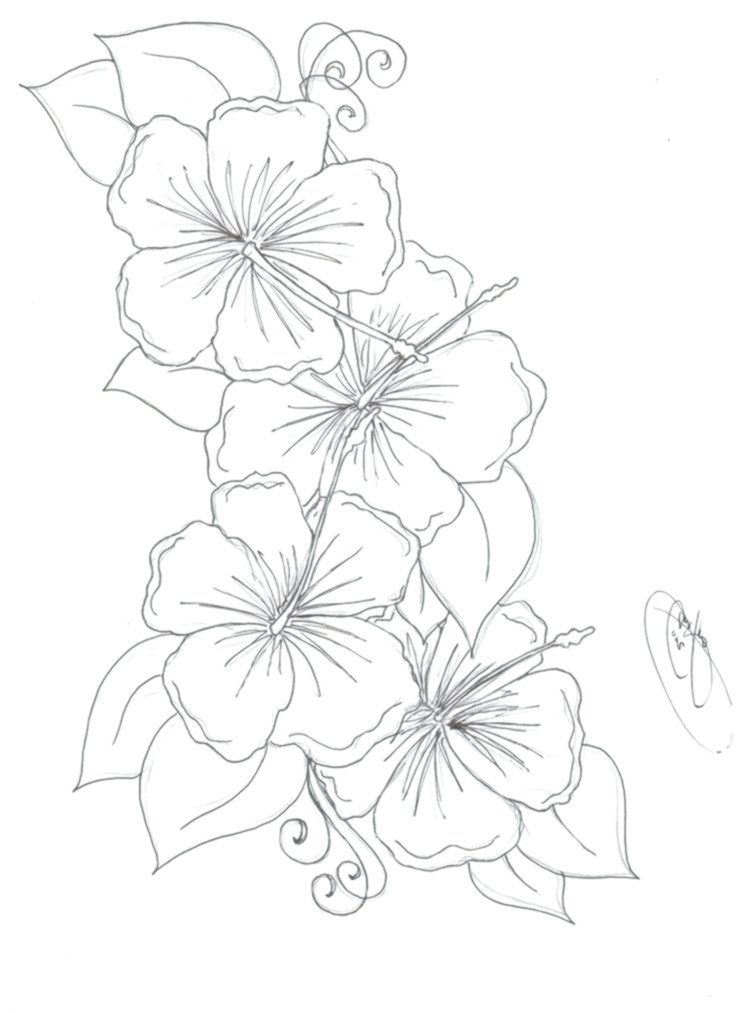 Hummingbird Hibiscus Tattoo Drawing Hibiscus Flower Drawing