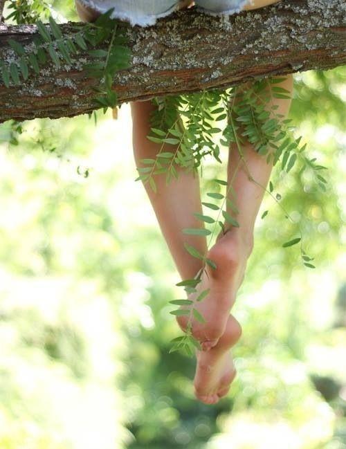 Air Ferns