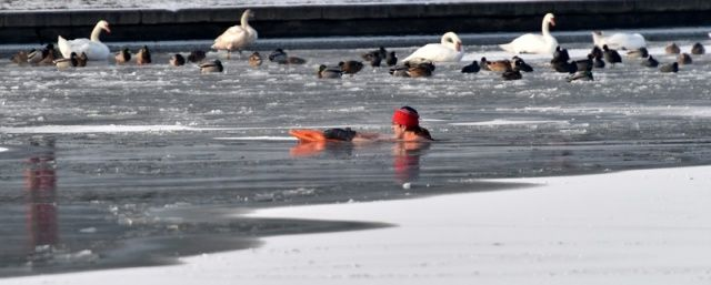 Cold weather enthusiasts, called Walruses, swim in the Wistula river as temperatures fell to minus 15 degrees Celsius, near the Wawel Castle in Krakow, Poland, 03 January 2016.