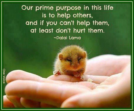 Helping hands should not be hurting hands the wisdom of the Dalai Lama.