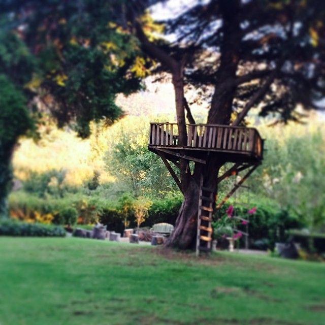 i still day dream in tree houses