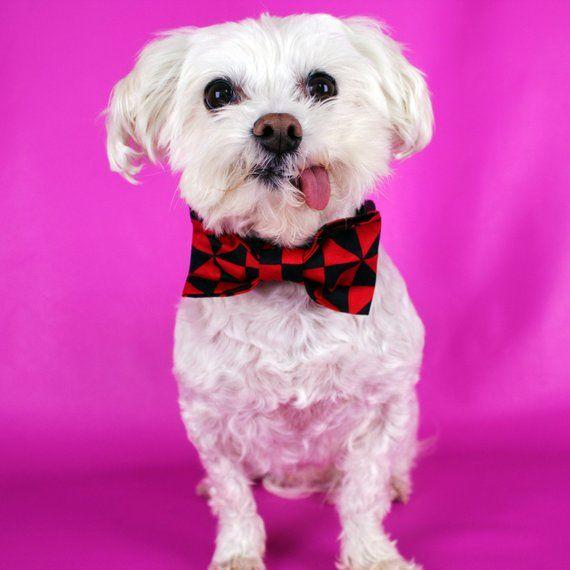 Black White Star Bowtie Collar Handmade Collar Accessories Dog Gift Idea Dog Dickie Bow Dog Outfit Dog Wedding Bowtie Dog Wedding Dog Gifts Dog Clothes