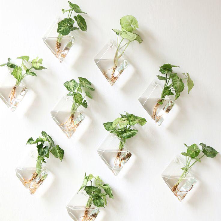 Växter på väggen - Stylizmo