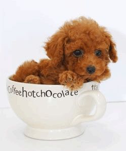 Cup of dog! ...........click here to find out more http://googydog.com