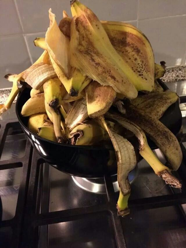 Banana peel for raspberry bushes. Banenschil aan de voet van frambozenstruik. Kalium