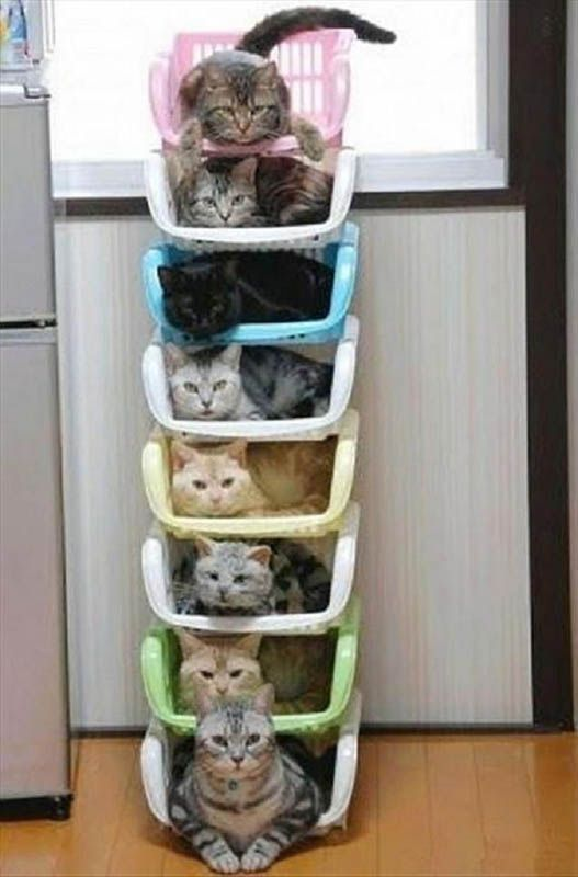 cat storage for the organized cat lady....