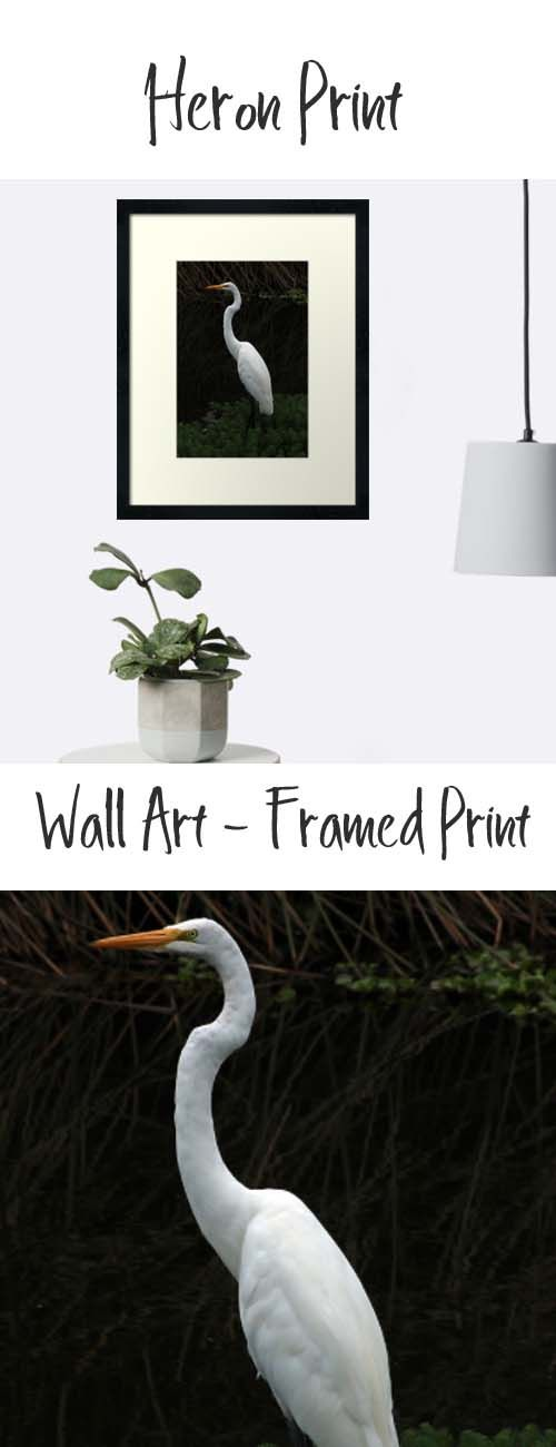 A framed wall print of a Heron in a marsh. Buy it here: https://www.redbubble.com/people/rhamm/works/11977985-great-heron-in-shore-plants?asc=u&p=framed-print&rel=carousel