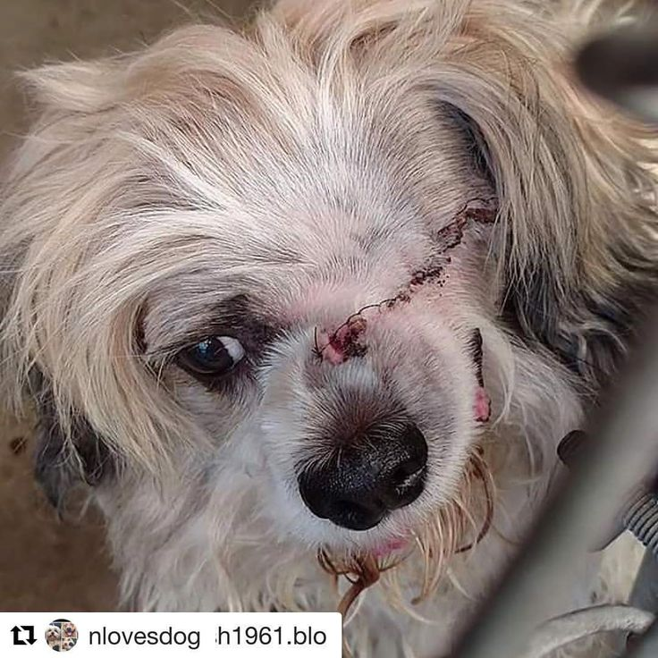 "72 Likes, 27 Comments - ANIMALS FEEL LOVE (@animals.feel.love) on Instagram: ""No dog should have to live out the rest of her life in this condition in a shelter. Can you imagine…"""