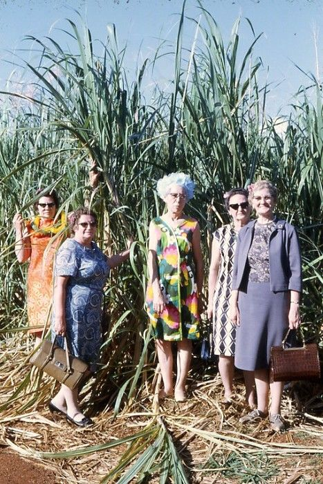 Ladies in the sugar cane. Hawaii, 1960s