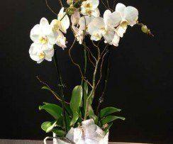 Flowering and Green Indoor Plants & Garden Centre Courtice