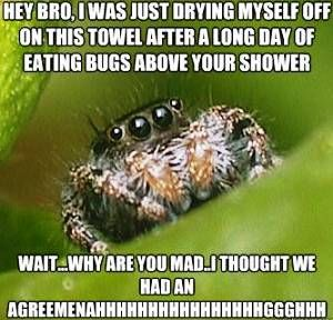 1000+ ideas about House Spider on Pinterest | Spiders ...