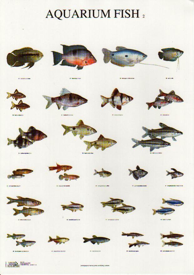Tank Fish Types Recherche Google Fish Pinterest
