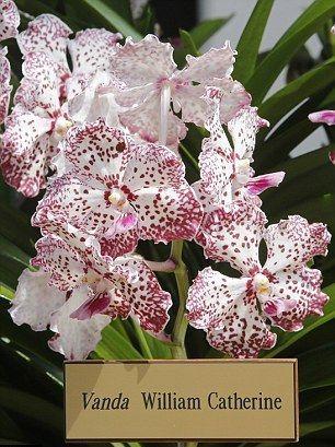 Kate Middleton et le prince William- Une orchidée baptisée en leur honneur