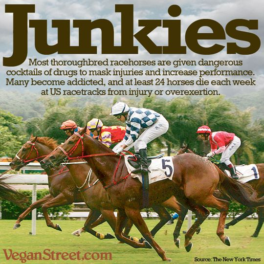 use of steroids in horse racing Anabolic steroids - uses and abuses racing industry taking steps toward controls how substances affect horses beyond the track  questions about their use in .