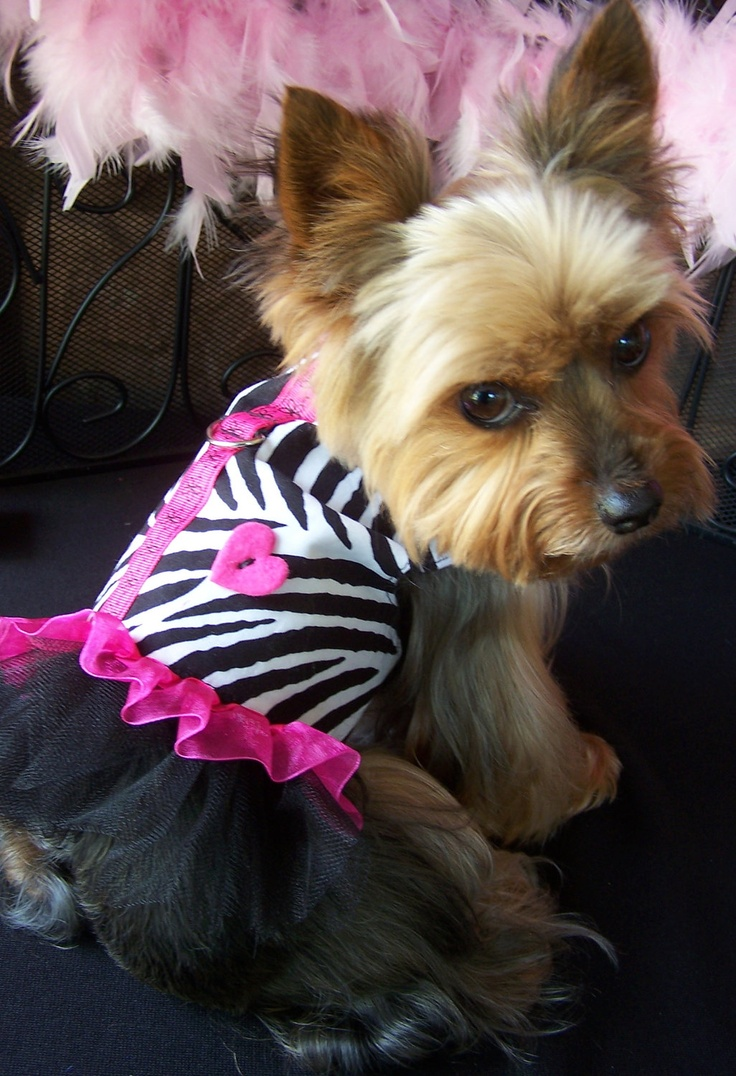 Dog Harness Dress in Zebra and Hot Pink Size X Small for toy dogs. $36.00, via Etsy.