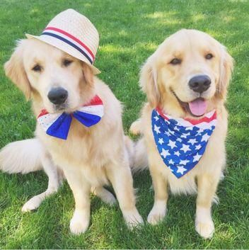 4th of july dog images