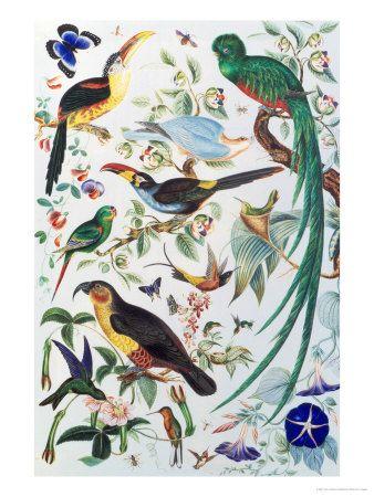 Exotic Parrots, c.1850 Lámina giclée by John James Audubon at AllPosters.com
