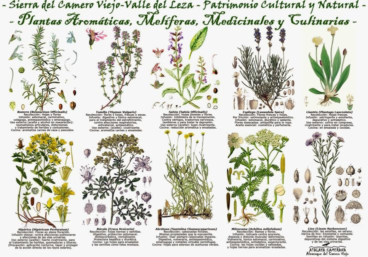 17 best images about edible herbs and flowers on pinterest - Plantas aromaticas de interior ...