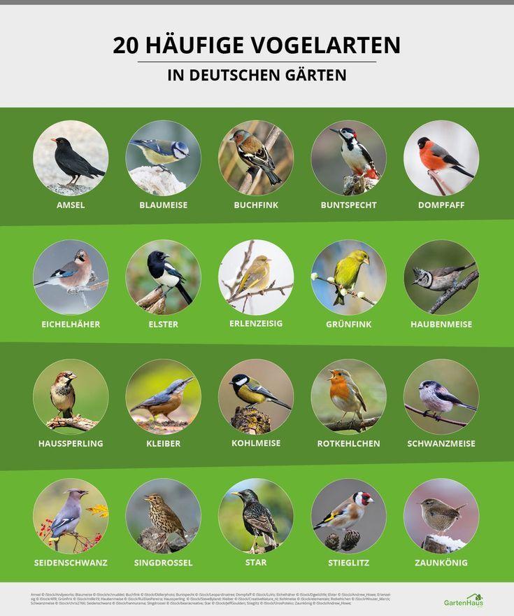 Vögel anlocken: So gestalten Sie Ihren Garten vogelfreundlich