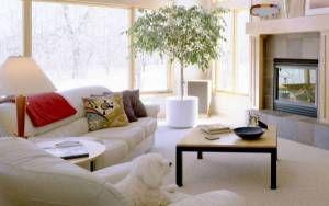 Обои Отдых перед телевизором, скачать картинки гостиная, зал, уголок, уютный, диван, собака, телевизор на рабочий стол бесплатно, раздел - скачать фото