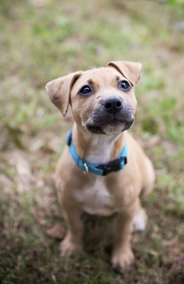 Adopt Me Humane Society Of Union County Nc Daily Dog Tag Dog Rescue Groups Puppies Dogs