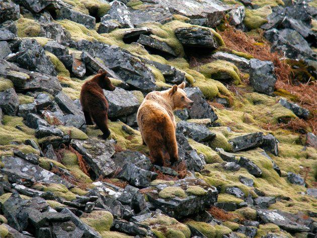 Somiedo: el oso pardo como excusa