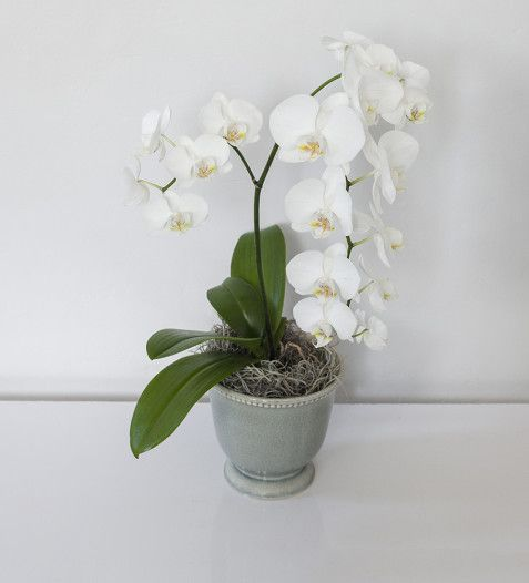 BUY NOW | Genova Orchid | Sorrento Events Online Shop