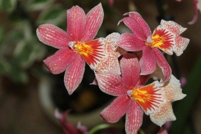 Очень красивые и необычные орхидеи)