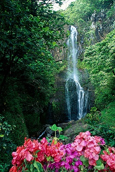 Hawaii, Maui, Wailua waterfall and rainforest, bougainvillea in foreground