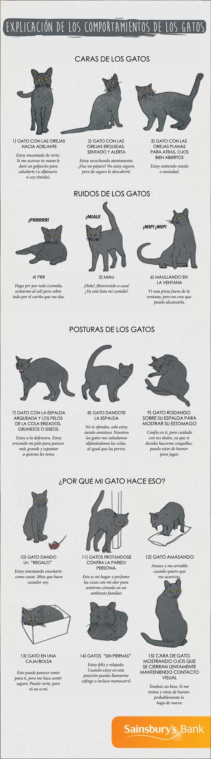 Comprender lo que tu gato está tratando de decirte gracias a esta práctica guía