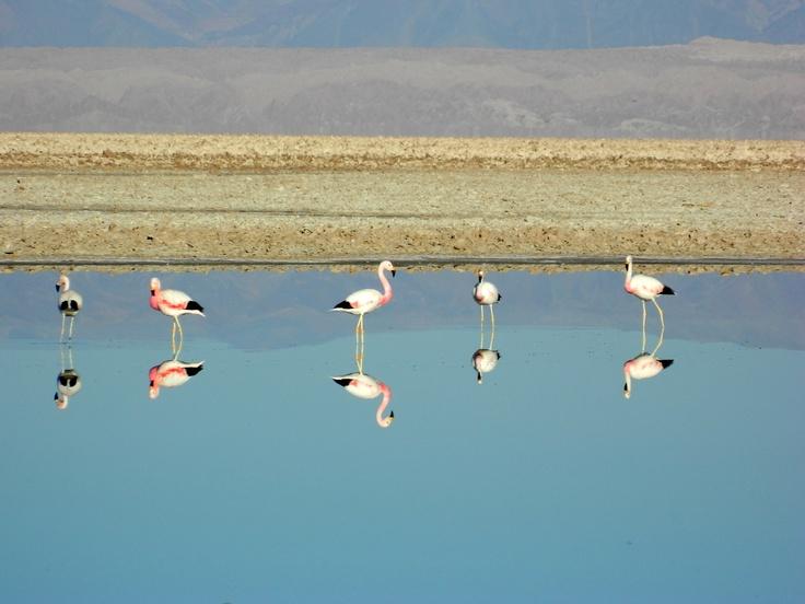 Laguna Chaxa, Reserva Nacional Los Flamencos en San Pedro de Atacama. Foto de Gabriel Hureau.