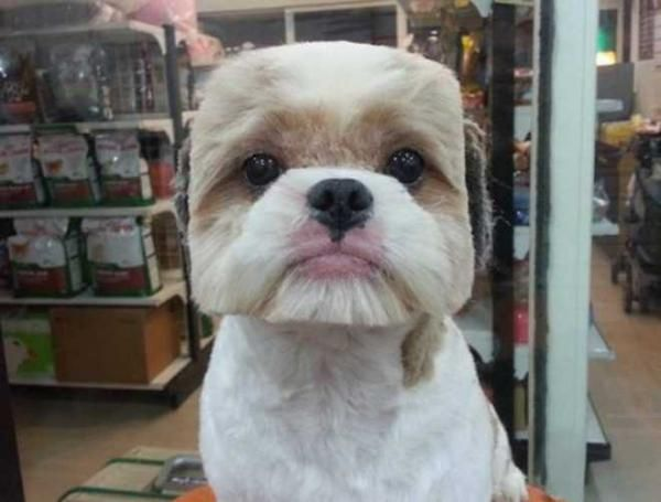 Funny Pet Grooming Style Dog Haircuts Pet Groomers Dog Groomers