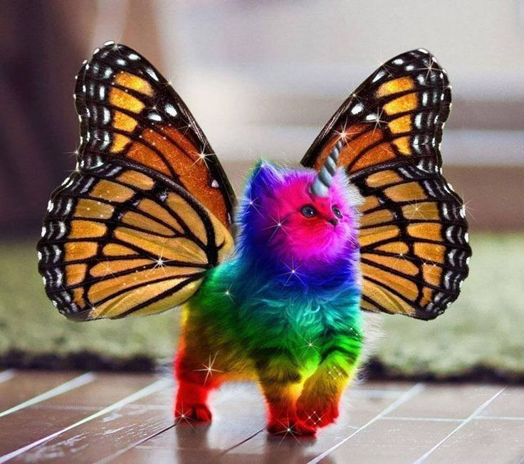 ...Because sometimes, you need a rainbow butterfly unicorn kitten...