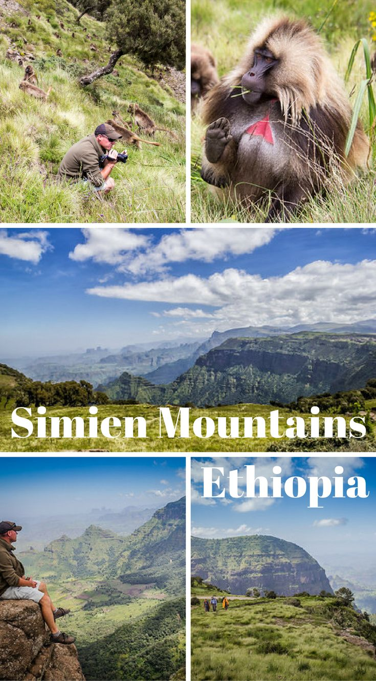 With its jaw dropping views of wild landscapes and wild flowers to its rare wildlife containing Gelada Baboons, Wallia Ibex and Ethiopian Wolves, the Simien Mountains is a rarely visited wonderland of nature. Click to read the full travel blog post Ultimate Guide to Hiking the Simien Mountains of Ethiopia http://www.divergenttravelers.com/hiking-simien-mountains-ethiopia/