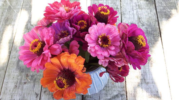 Plukbloemen knip ik ieder jaaruit mijn eigen tuin zoals lathyrus, zinnia's en dahlia's. Helaas zijn het vaak maar kleine bosjes uit eigen tuin en vind ik het zonde om te plukken als je niet zo veel hebt. De bossen bloemen…