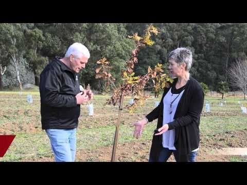 How to grow Truffle Trees
