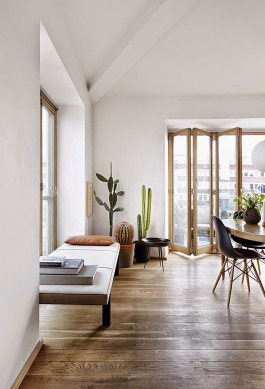 Cactus In Living Room
