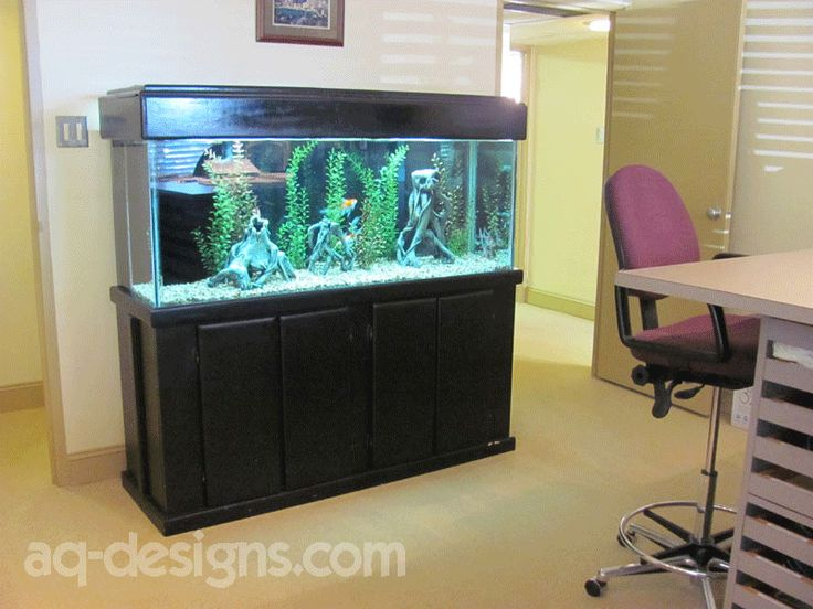 125 gallon aquarium in the front office at an apartment complex in Little Rock.