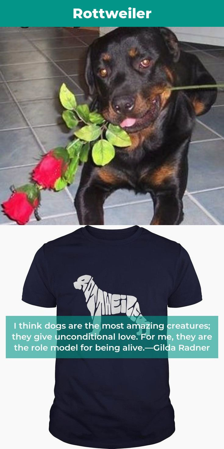 Rottweiler Funny Rottweilerpuppy Rottweileroftheday Rottweiler Quote Rottweiler Facts Rottweiler American R Rottweiler Rottweiler Funny Rottweiler Quotes