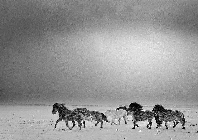 www.pegasebuzz.com | Equestrian photography : Óskar Páll Elfarsson - icelandic horse