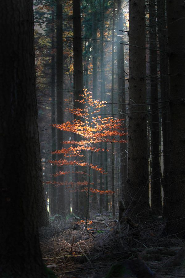 """Untitled by Niklas Passmann I've always had a great appreciation for the """"shaft of light in the forest"""" shots. There's so much you can draw, emotionally, from something so simple."""